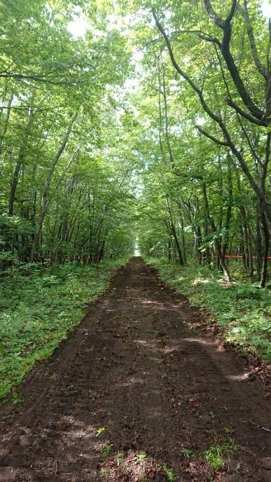 新たなる道&桂、林間コース整備_e0183255_03180240.jpg