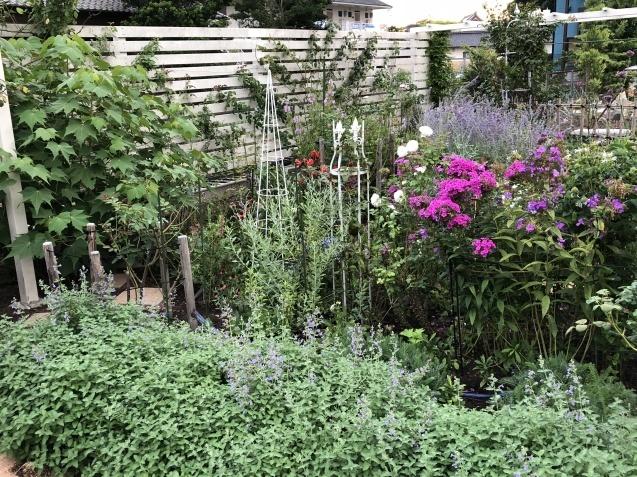8月の庭「キャットミントの2番花」_a0243064_10132374.jpg