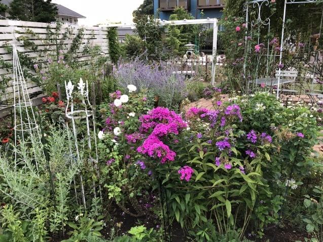8月の庭「キャットミントの2番花」_a0243064_10165375.jpg