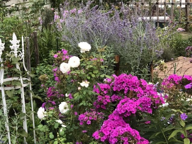 8月の庭「キャットミントの2番花」_a0243064_10181032.jpg