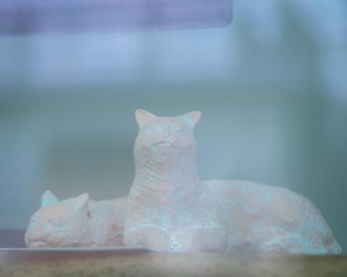 夏バテの猫。_b0022268_18130470.jpg