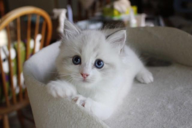 今日の仔猫達 さぁて ママの所に帰ろう_a0285571_22221688.jpg