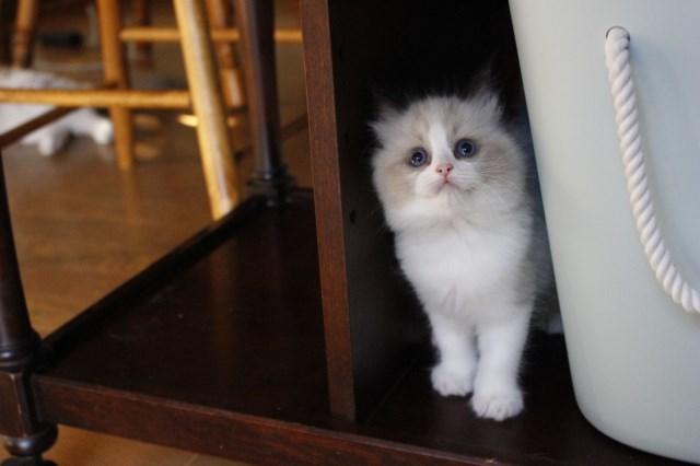今日の仔猫達 さぁて ママの所に帰ろう_a0285571_22222183.jpg