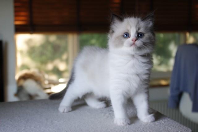 今日の仔猫達 さぁて ママの所に帰ろう_a0285571_22222754.jpg