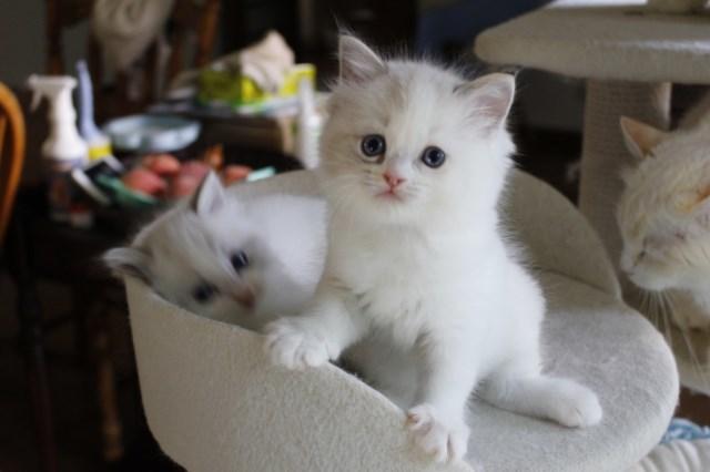 今日の仔猫達 さぁて ママの所に帰ろう_a0285571_22223386.jpg