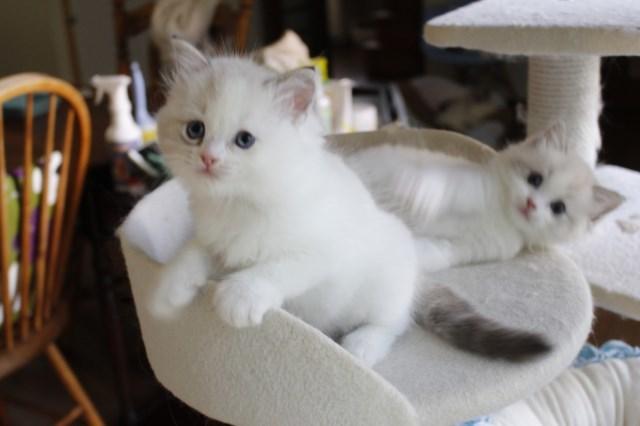 今日の仔猫達 さぁて ママの所に帰ろう_a0285571_22223955.jpg