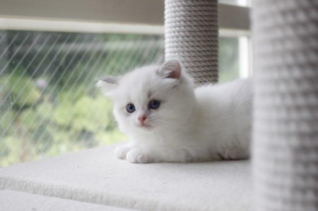 今日の仔猫達 さぁて ママの所に帰ろう_a0285571_22225636.jpg
