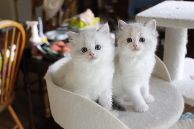 今日の仔猫達 さぁて ママの所に帰ろう_a0285571_22230299.jpg
