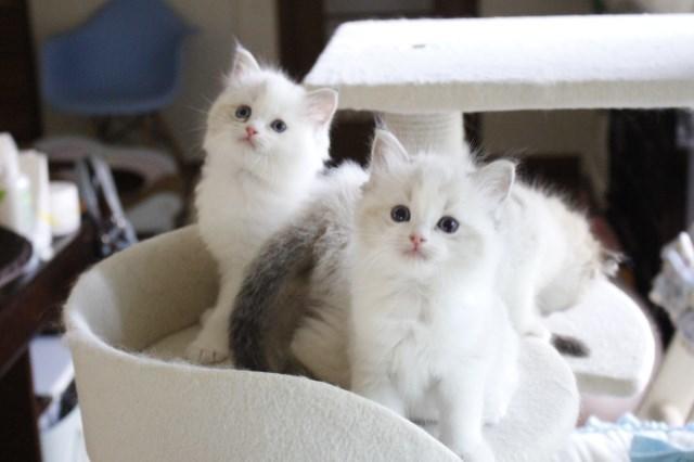 今日の仔猫達 さぁて ママの所に帰ろう_a0285571_22230634.jpg