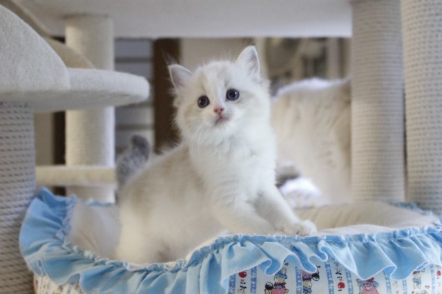 今日の仔猫達 さぁて ママの所に帰ろう_a0285571_22231230.jpg