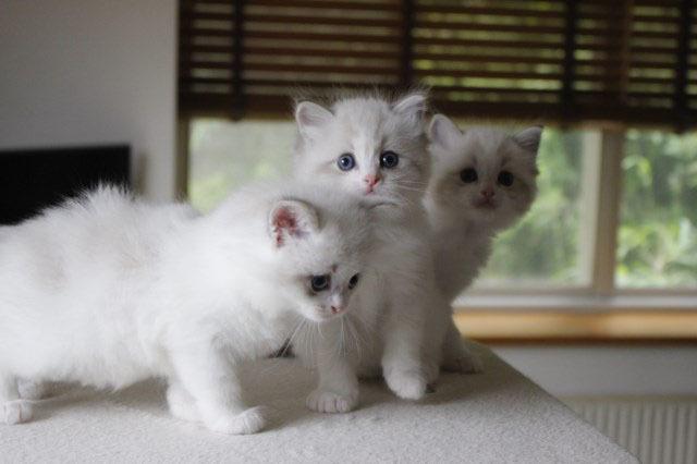 今日の仔猫達 さぁて ママの所に帰ろう_a0285571_22231890.jpg