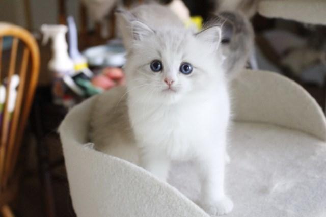 今日の仔猫達 さぁて ママの所に帰ろう_a0285571_22232370.jpg