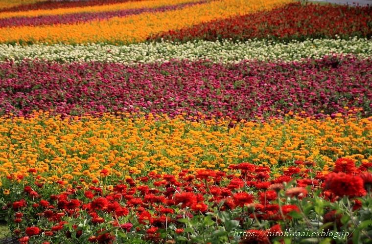 富士見高原リゾート花の里 ②お花畑エリアと萌黄の村_f0374092_00101722.jpg