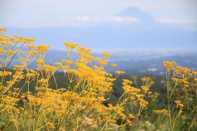 富士見高原リゾート花の里 ①富士山_f0374092_10220779.jpg