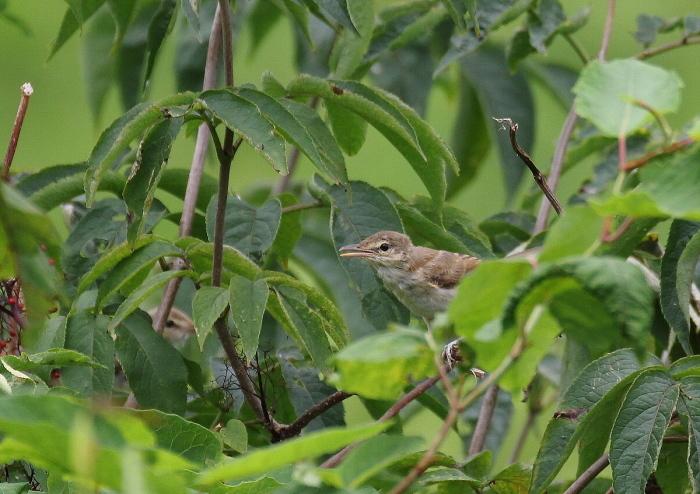 やはり幼鳥は可愛い_c0113597_14173918.jpg