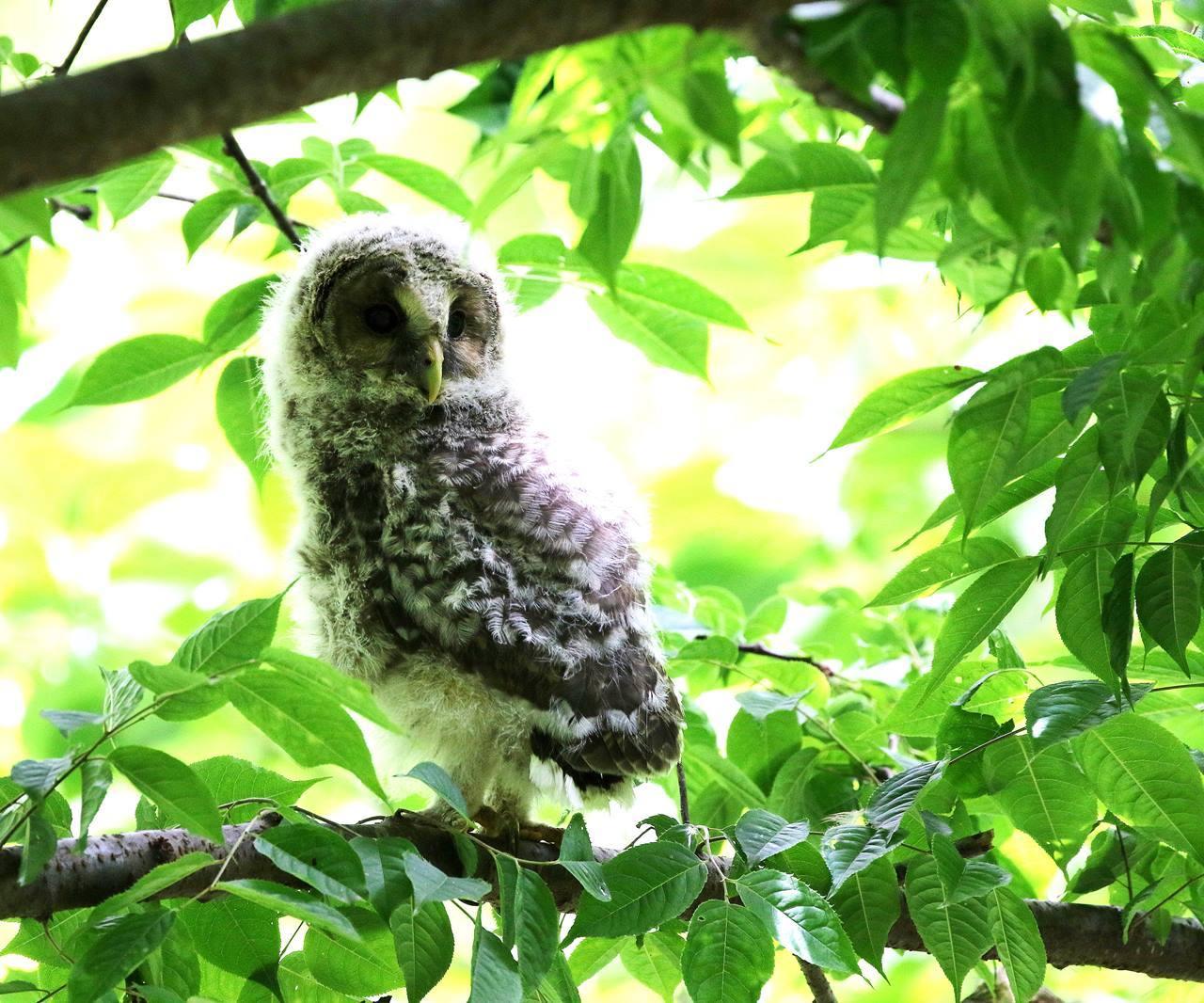 春先に出会ったフクロウを(最終)・・・_c0213607_18244426.jpg