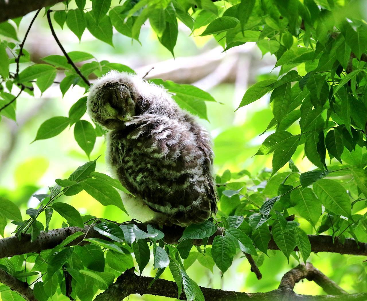 春先に出会ったフクロウを(最終)・・・_c0213607_18245007.jpg