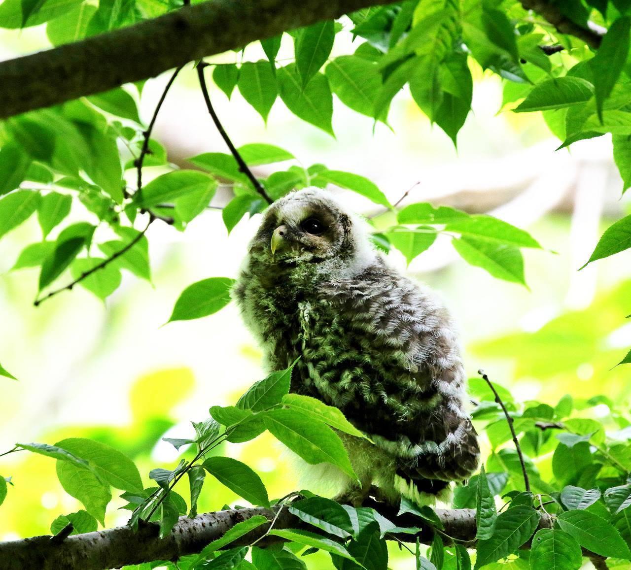 春先に出会ったフクロウを(最終)・・・_c0213607_18245822.jpg