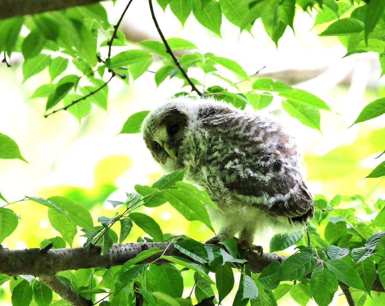 春先に出会ったフクロウを(最終)・・・_c0213607_18251435.jpg