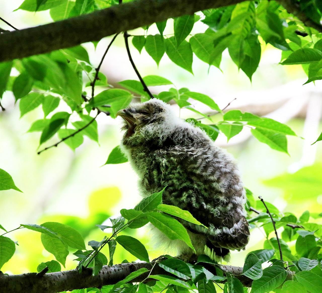 春先に出会ったフクロウを(最終)・・・_c0213607_18252074.jpg