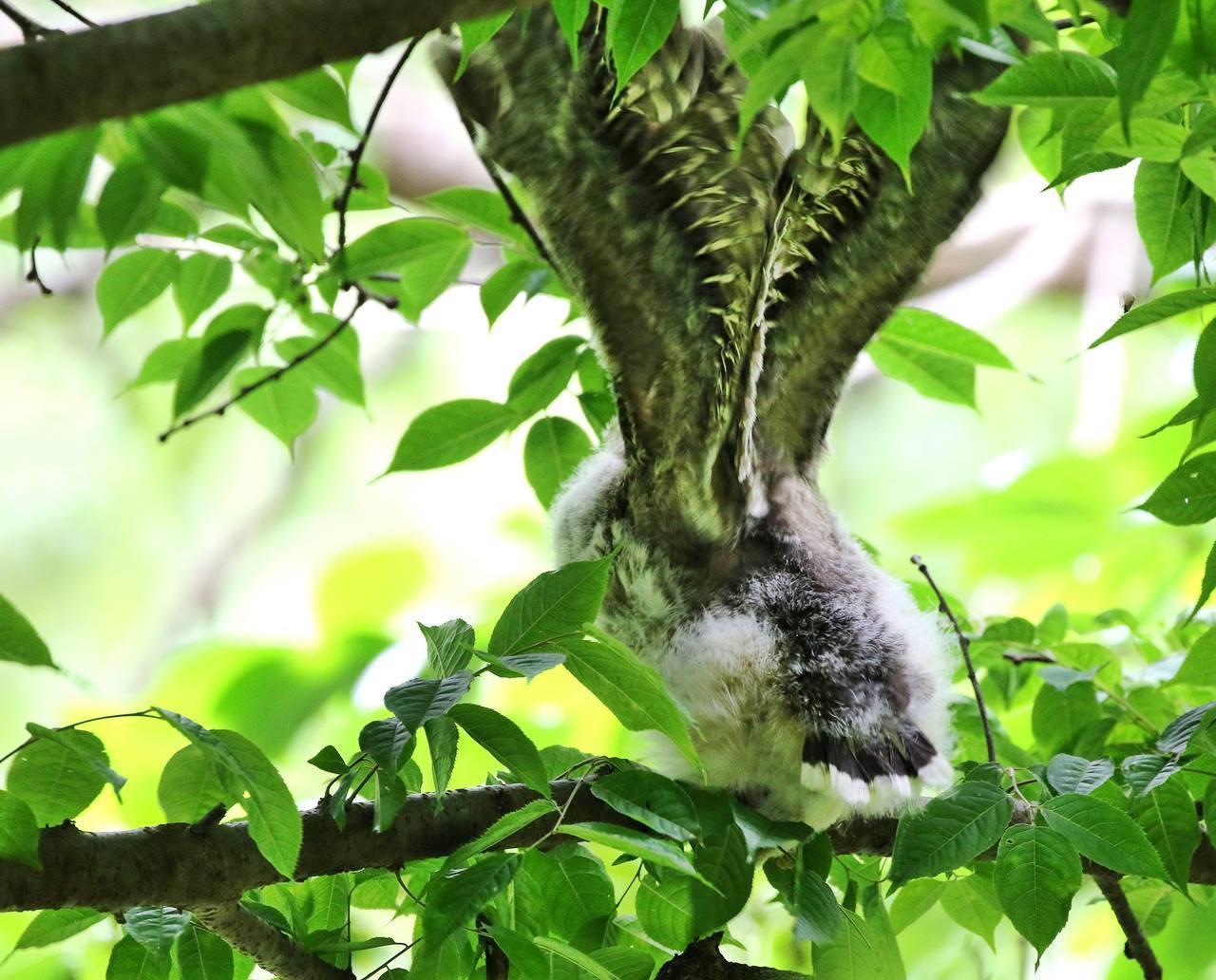 春先に出会ったフクロウを(最終)・・・_c0213607_18254026.jpg