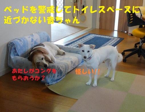 f0121712_16005175.jpg