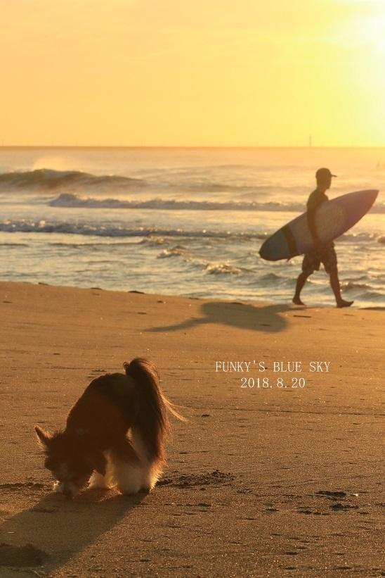 さよなら夏umi2018・Ⅲ (ポン♪ポン♪ポン♪と、)_c0145250_09080115.jpg