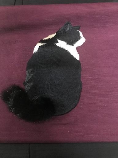 商品紹介・ふわふわ尻尾の本物のような白黒の猫の帯。_f0181251_1101479.jpg