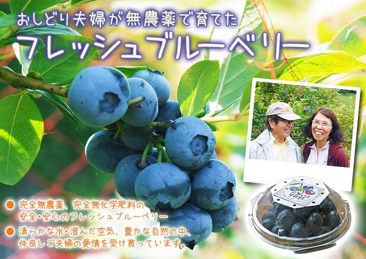 フレッシュブルーベリーが今まさに最旬!無農薬栽培の朝採りブルーベリーを即日発送でお届けします!_a0254656_17265023.jpg