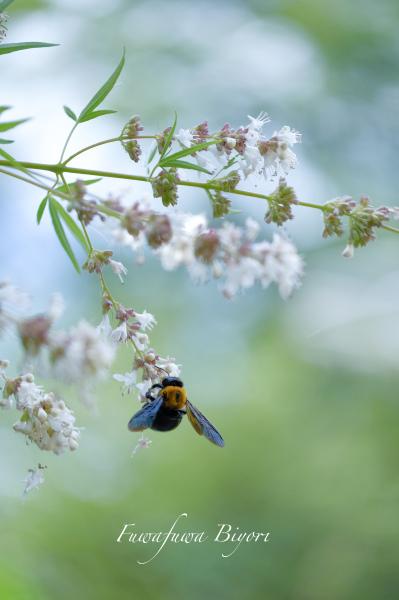 公園で遊ぶ蝶やミツバチ **_d0344864_16295910.jpg