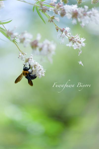 公園で遊ぶ蝶やミツバチ **_d0344864_16305039.jpg