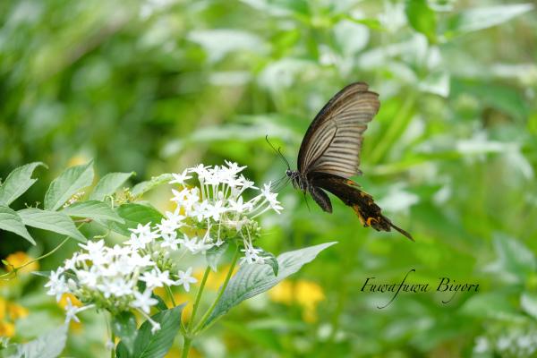 公園で遊ぶ蝶やミツバチ **_d0344864_16324042.jpg