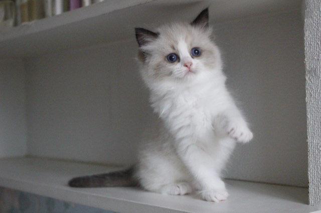 今日の仔猫達 オーナー様募集始めます_a0285571_21510001.jpg