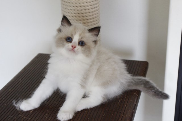 今日の仔猫達 オーナー様募集始めます_a0285571_21510526.jpg