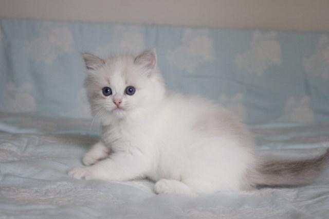 今日の仔猫達 オーナー様募集始めます_a0285571_21511174.jpg