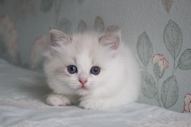 今日の仔猫達 オーナー様募集始めます_a0285571_21511829.jpg
