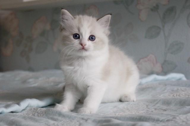 今日の仔猫達 オーナー様募集始めます_a0285571_21514041.jpg