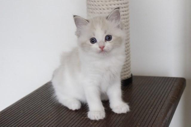 今日の仔猫達 オーナー様募集始めます_a0285571_21514582.jpg