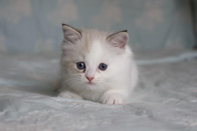 今日の仔猫達 オーナー様募集始めます_a0285571_21515134.jpg