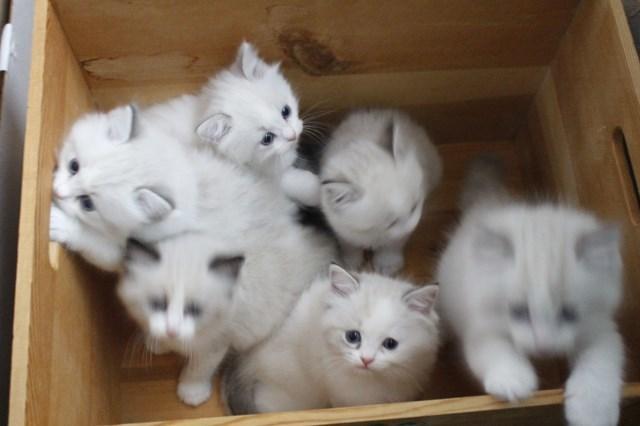 今日の仔猫達 オーナー様募集始めます_a0285571_21515625.jpg