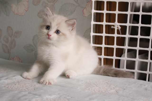 今日の仔猫達 オーナー様募集始めます_a0285571_21520222.jpg