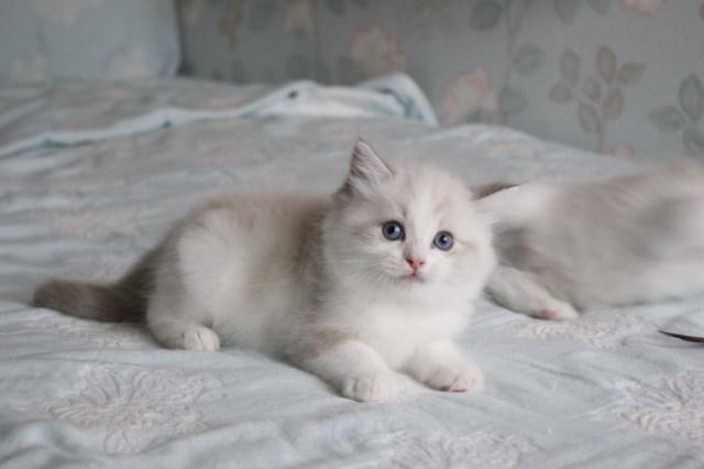 今日の仔猫達 オーナー様募集始めます_a0285571_21520716.jpg