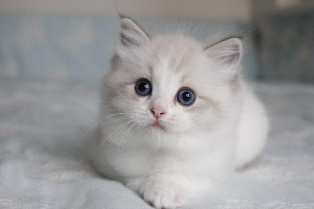 今日の仔猫達 オーナー様募集始めます_a0285571_21521219.jpg
