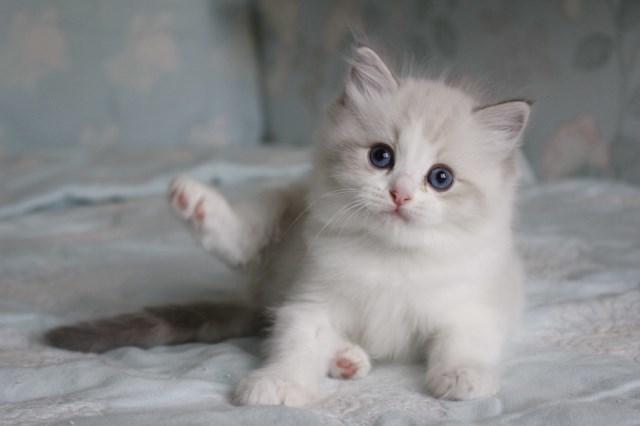 今日の仔猫達 オーナー様募集始めます_a0285571_21521828.jpg