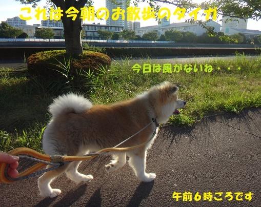 f0121712_14432134.jpg