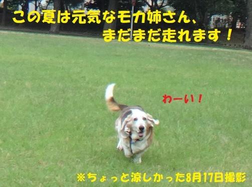 f0121712_15222151.jpg