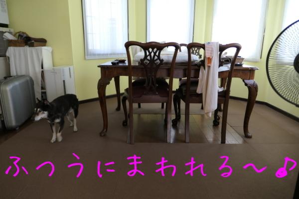 f0369014_20534366.jpg