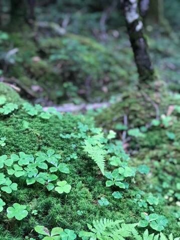 北八ヶ岳の苔の森_d0035921_22511412.jpg