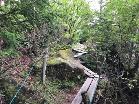北八ヶ岳の苔の森_d0035921_22590106.jpg