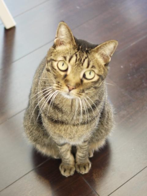 猫のお留守番 ララちゃん編。_a0143140_23000939.jpg